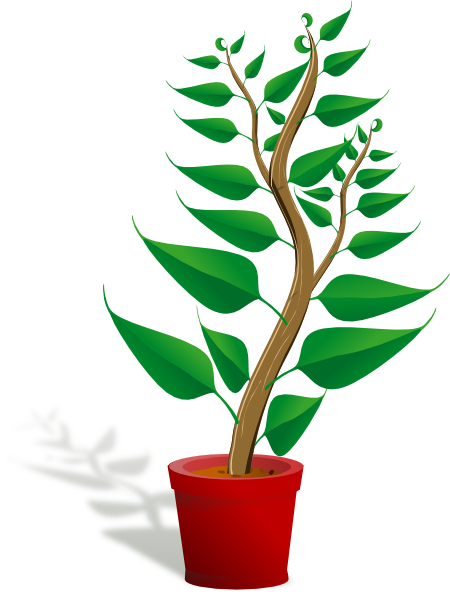 transparent fern animated