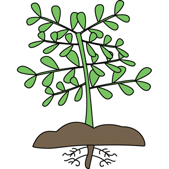 Plants clipart. Plant with roots mockingbird