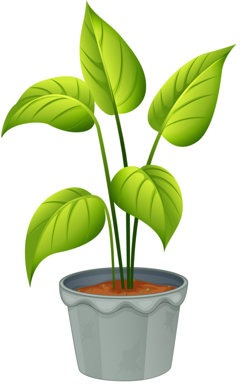Plants clipart. Green home plant my