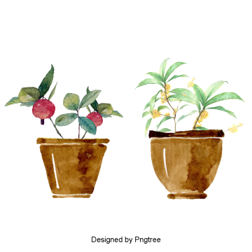 Aesthetic plant png. Design vectors psd and
