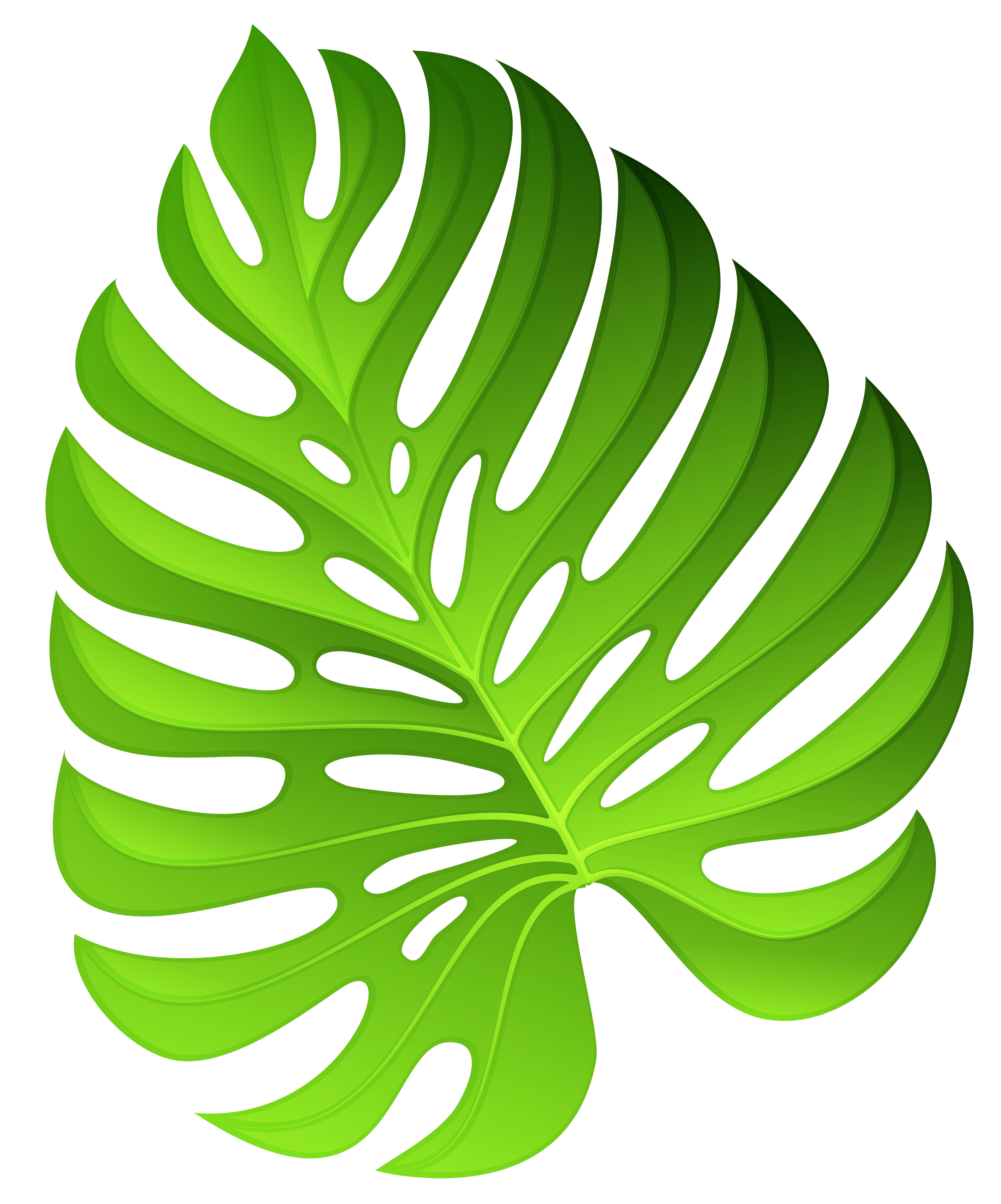 Plant clipart decoration. Exotic green png image