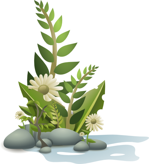 plants clipart flower plant
