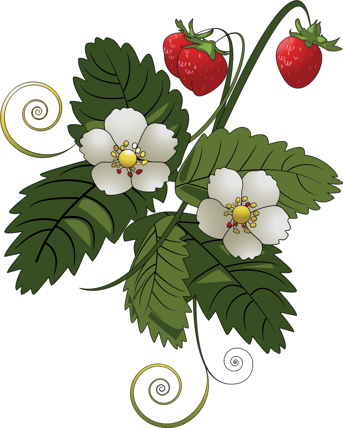 Plant clipart fruit plant. Strawberry big image png