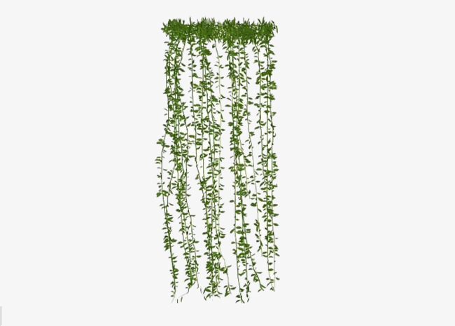 Plant clipart green plant. Hanging plants climb the