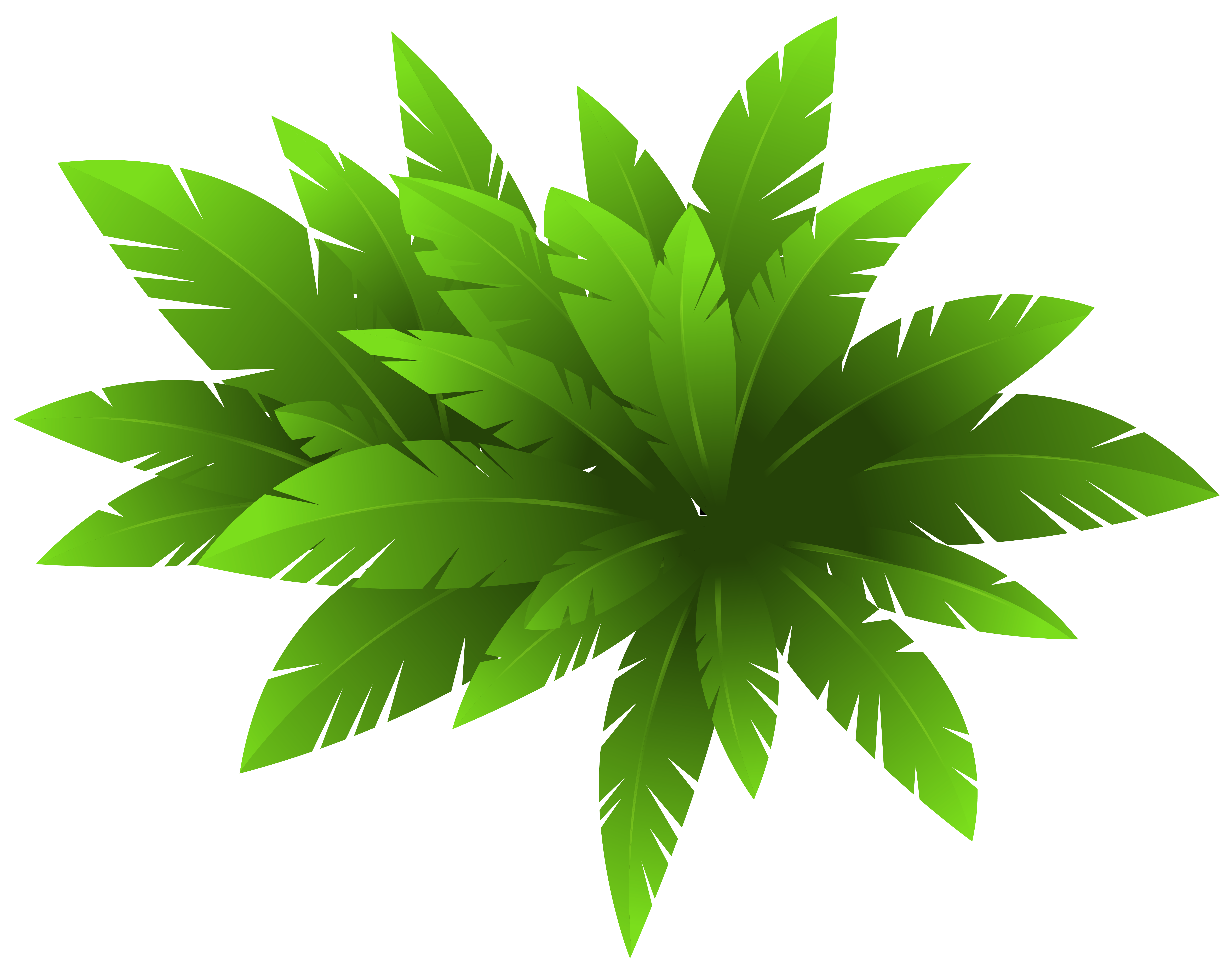 Plant clipart green plant. Decoration png image gallery