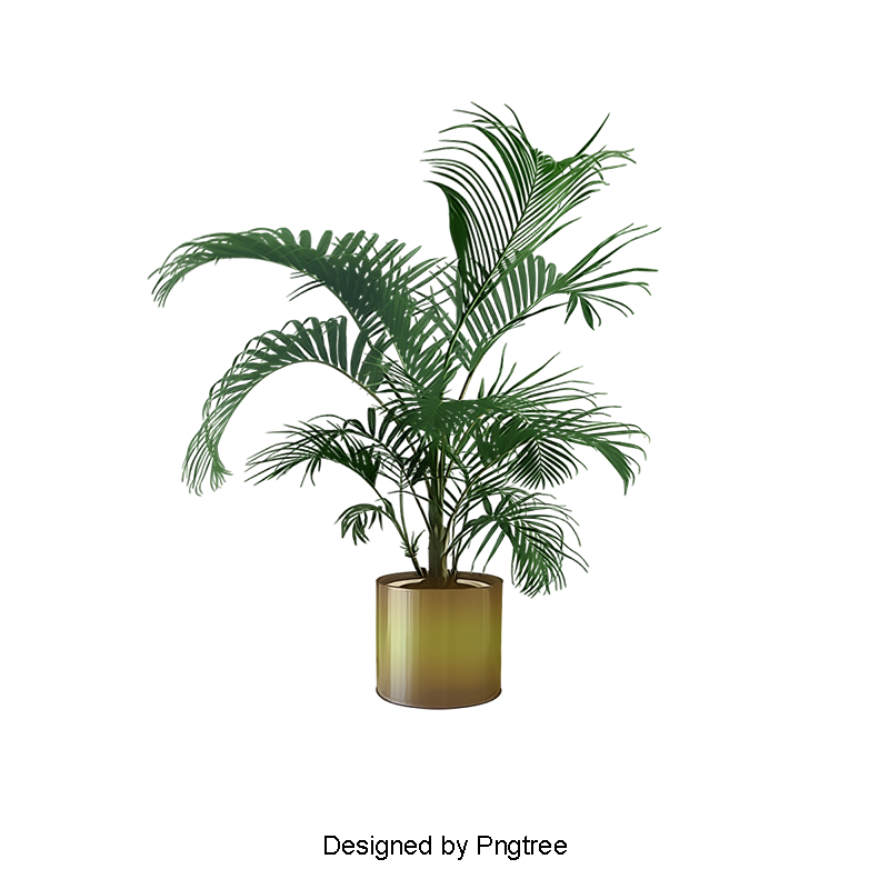 Plant clipart potted plant. Indoor plants png and