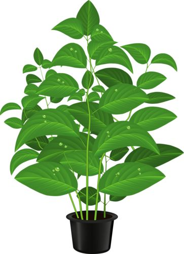 best clip art. Plant clipart potted plant image royalty free