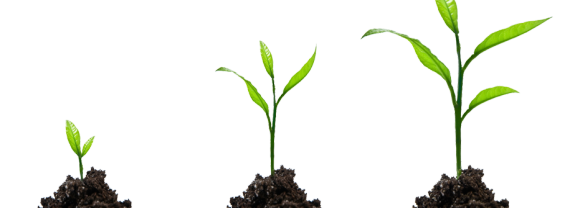 Growth vector background. Png image with transparent