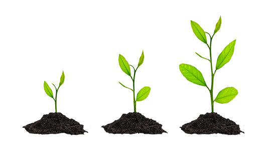 plant growth png