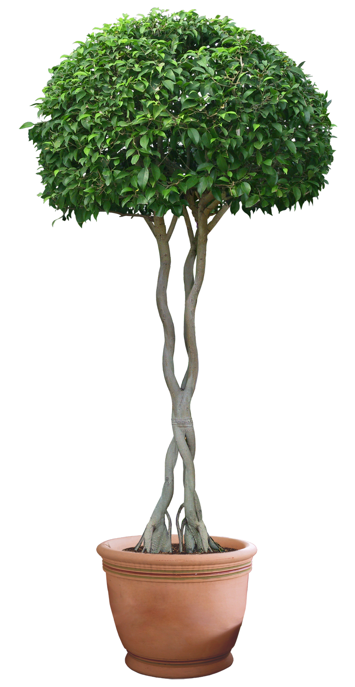 Plant transparent png. Hd images pluspng by