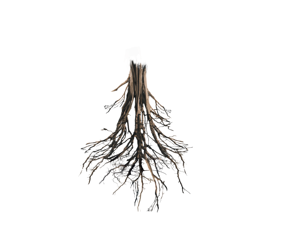 Plant with roots png. Floating island tree trunk