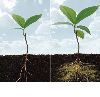 Plant with roots png. Download soil and root
