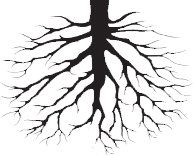 Plant roots png. Drawing at getdrawings com