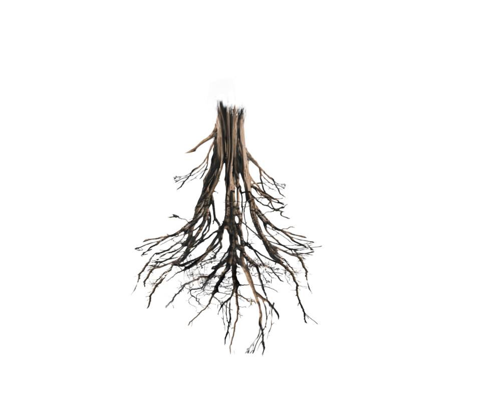 Plant roots png. Floating island tree trunk
