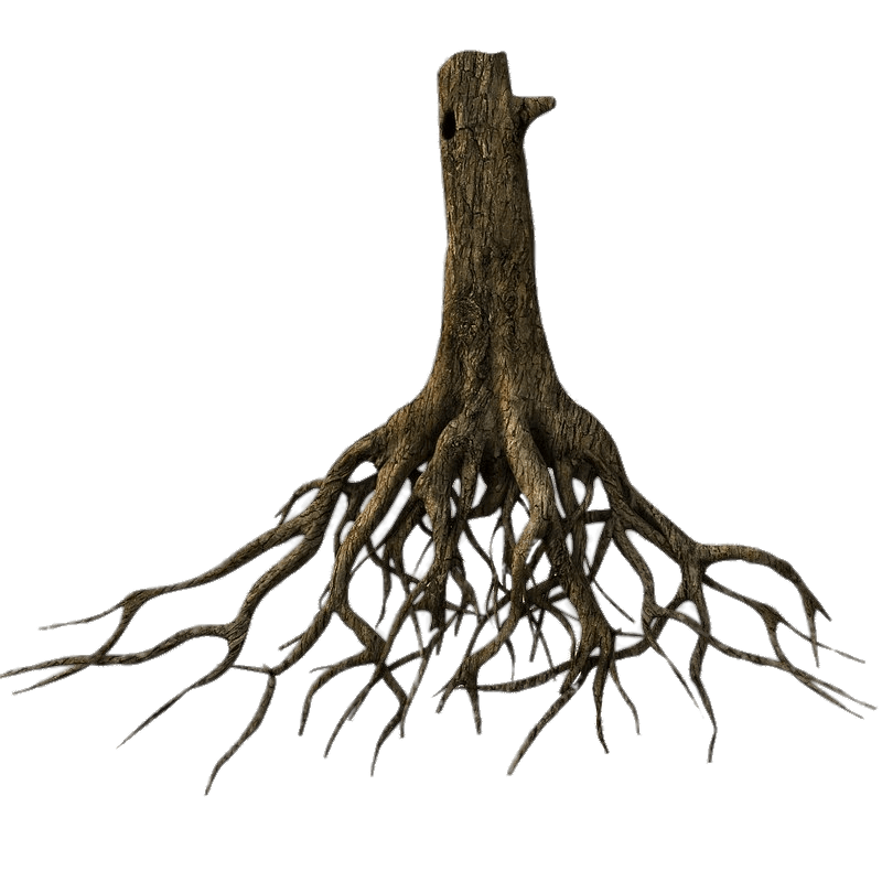 Plant roots png. Lower tree trunk and