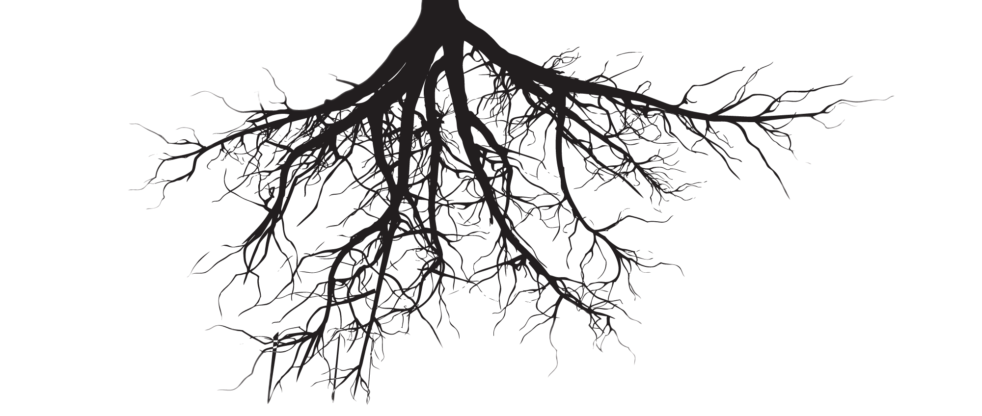 Plant with roots png. Fine transparent stickpng nature