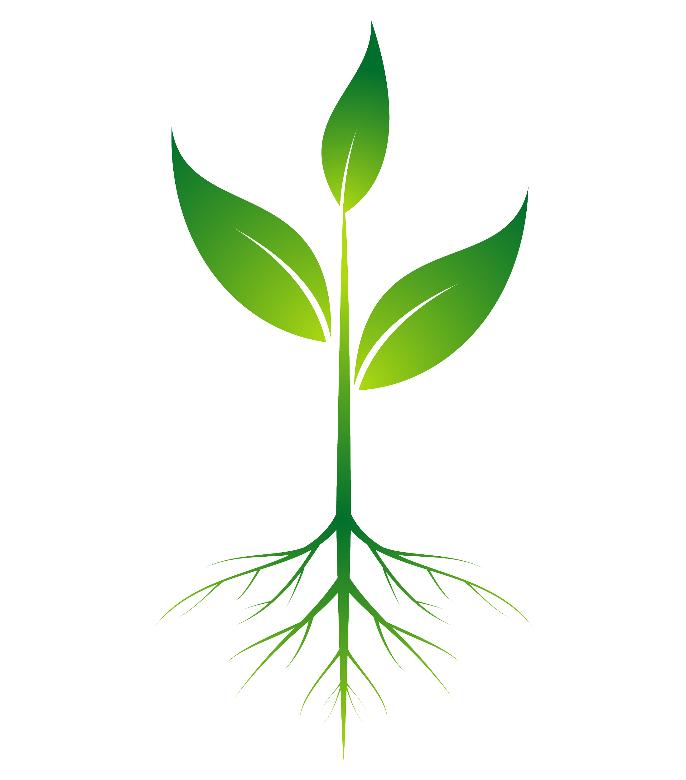Plant with roots png. Root clip art transprent