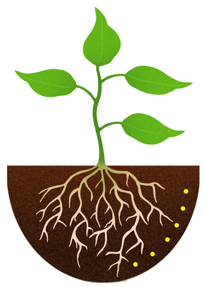 Soil and roots png. Plant with google search