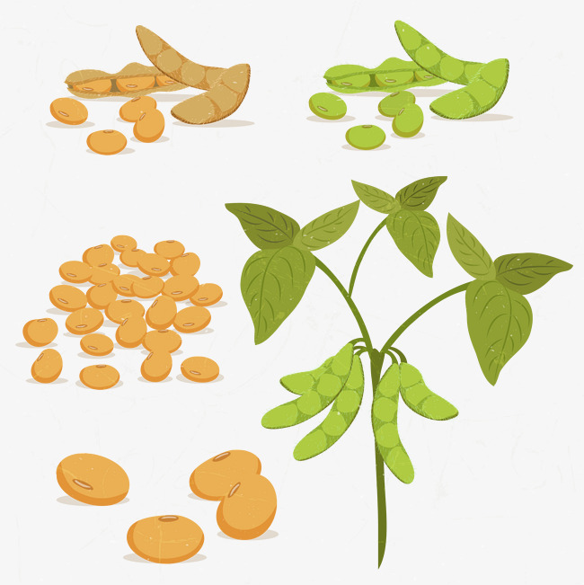 Plants clipart bean plant. Grow beans green png