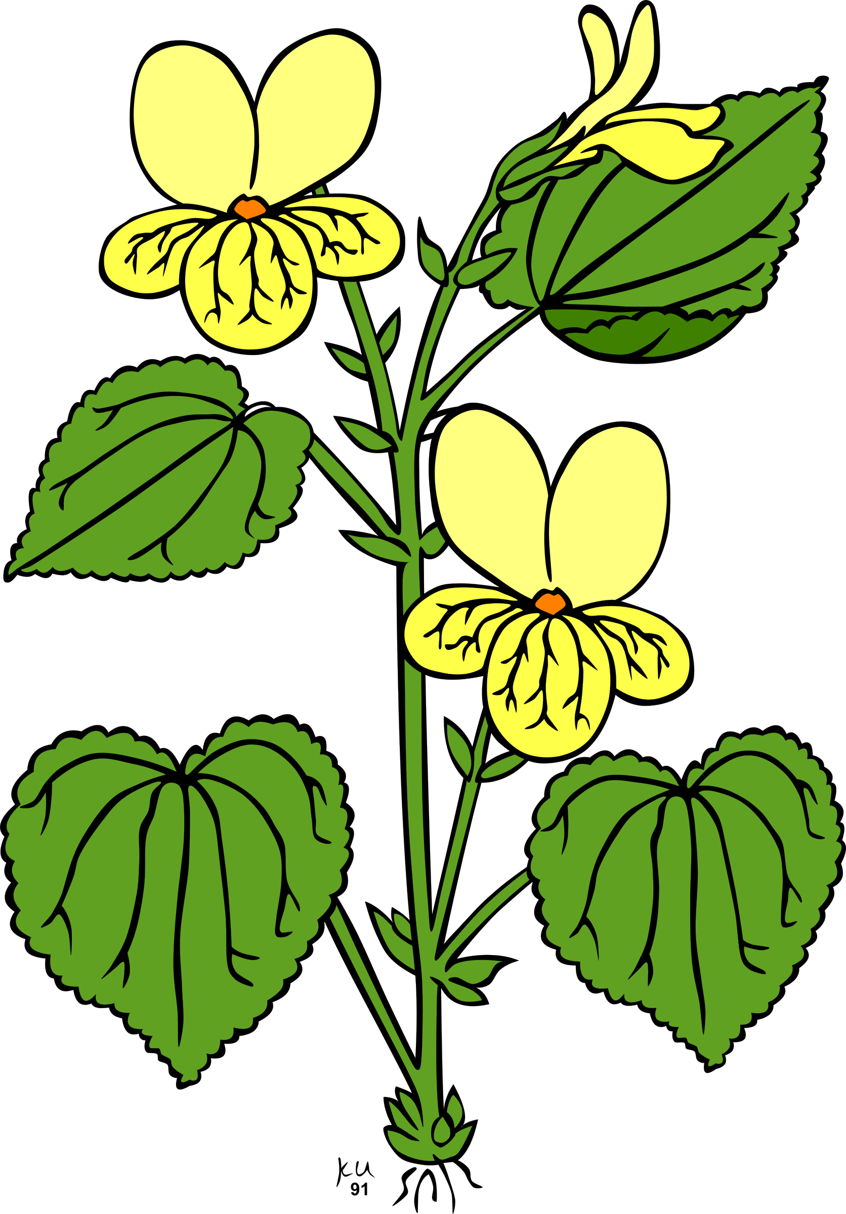 Plants clipart flower plant. Jungle at getdrawings com