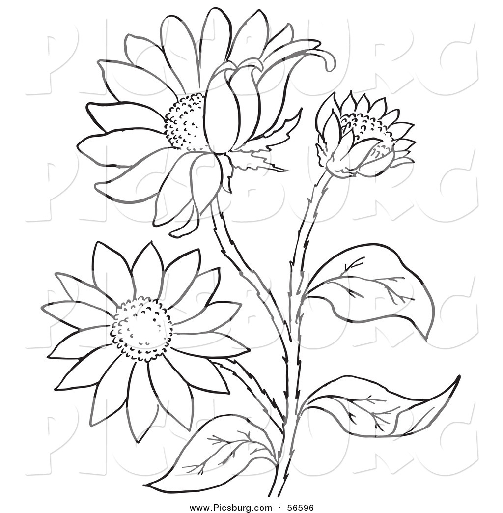 Plants clipart flower plant. Drawing picture of flowers
