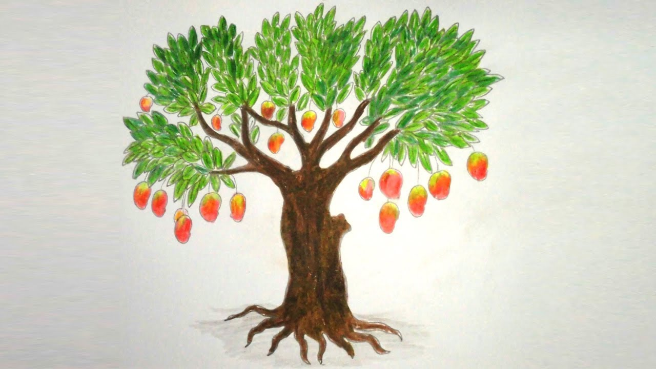 Plants clipart mango tree. Drawing at getdrawings com