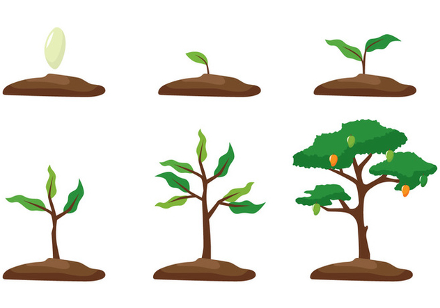 Plants clipart mango tree. Growth free vector download