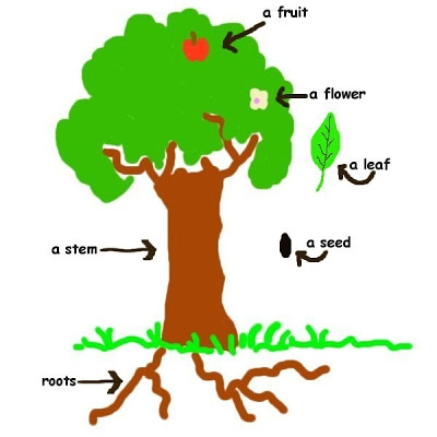 Plants clipart potatoe. Silhouette plant at getdrawings