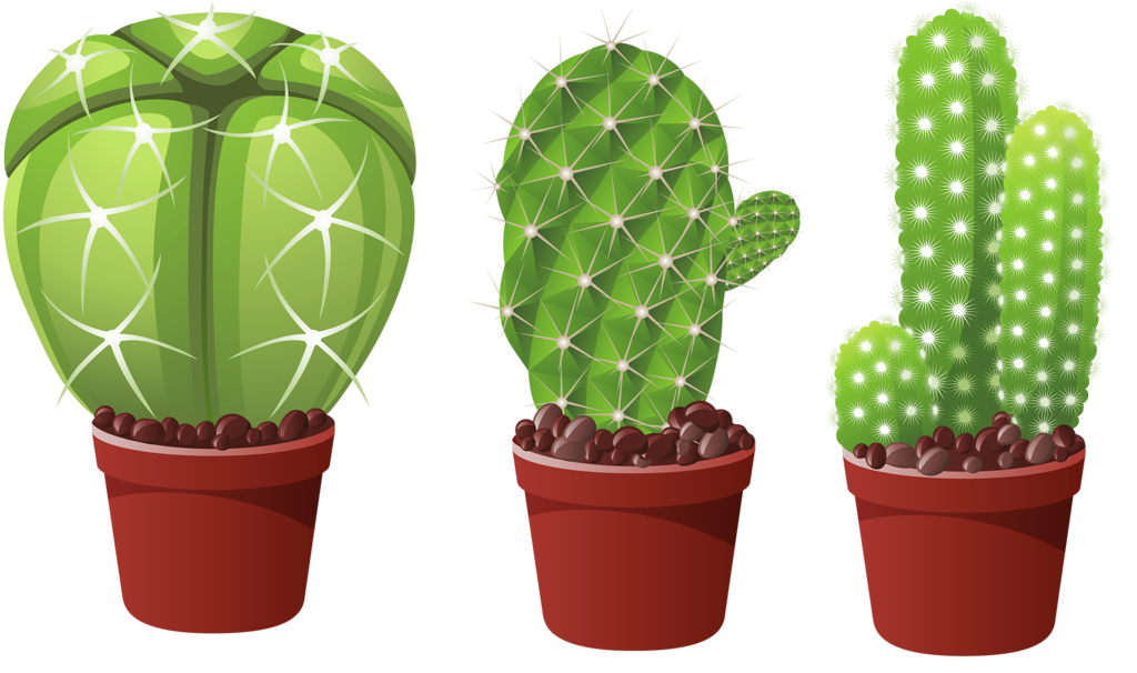 Plants clipart succulent. Picture my garden valley