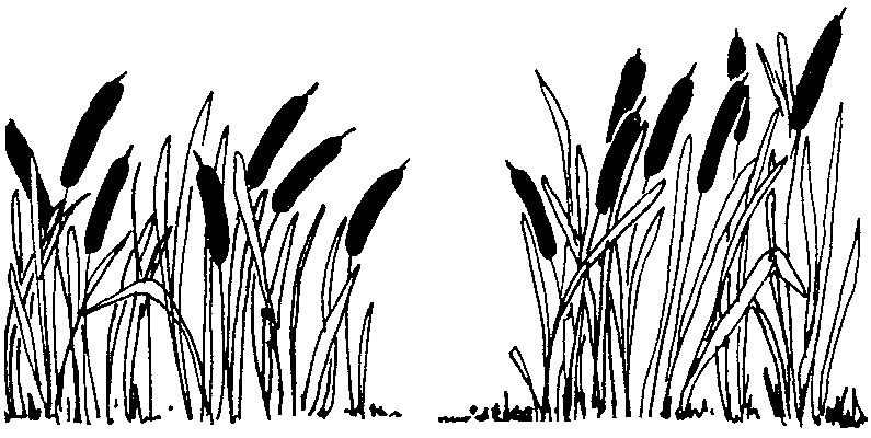 plants clipart swamp