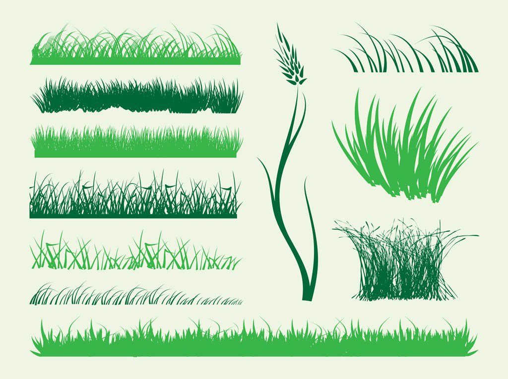 Plants clipart swamp. Tuft grass pencil and