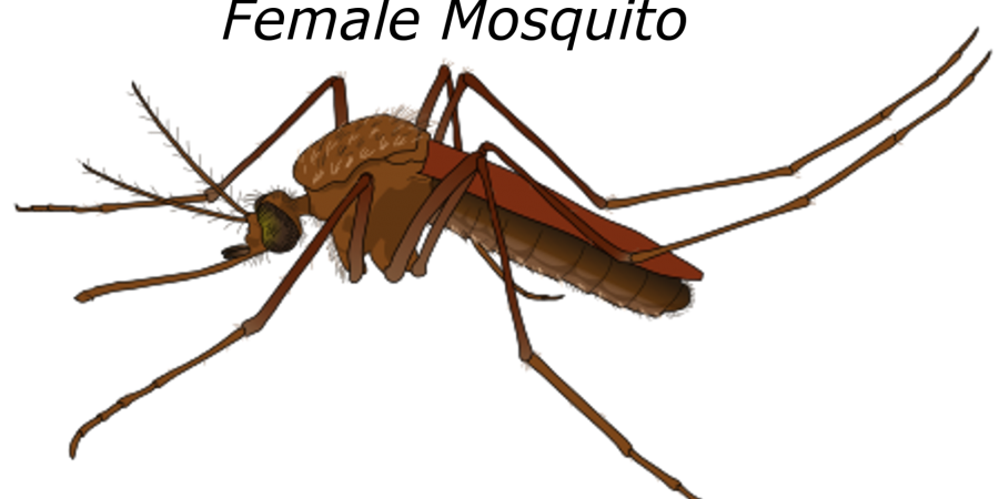 vector mosquitoes malaria african