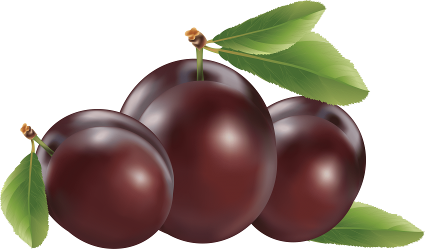 Plum clipart. Download png photo toppng