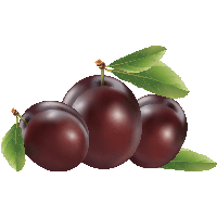 Plum clipart. Download free png photo