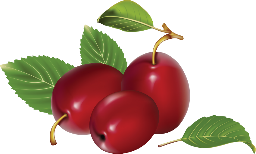 Plum clipart one. Download png photo toppng