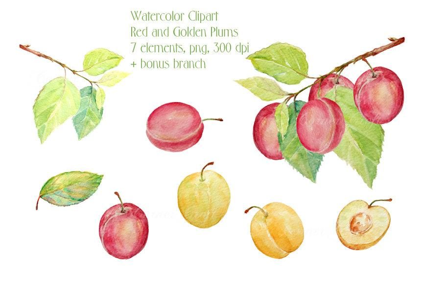 Plum clipart one. Watercolor branches golden and