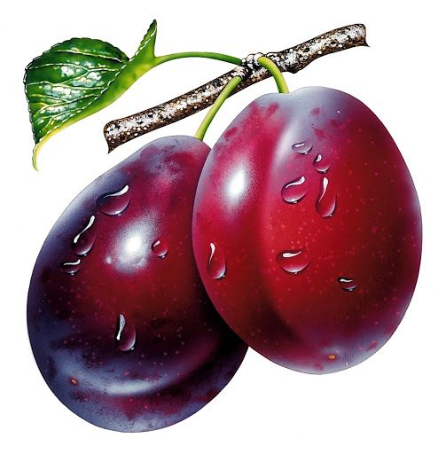 Plum clipart plum fruit. Pin by alekseeva elena