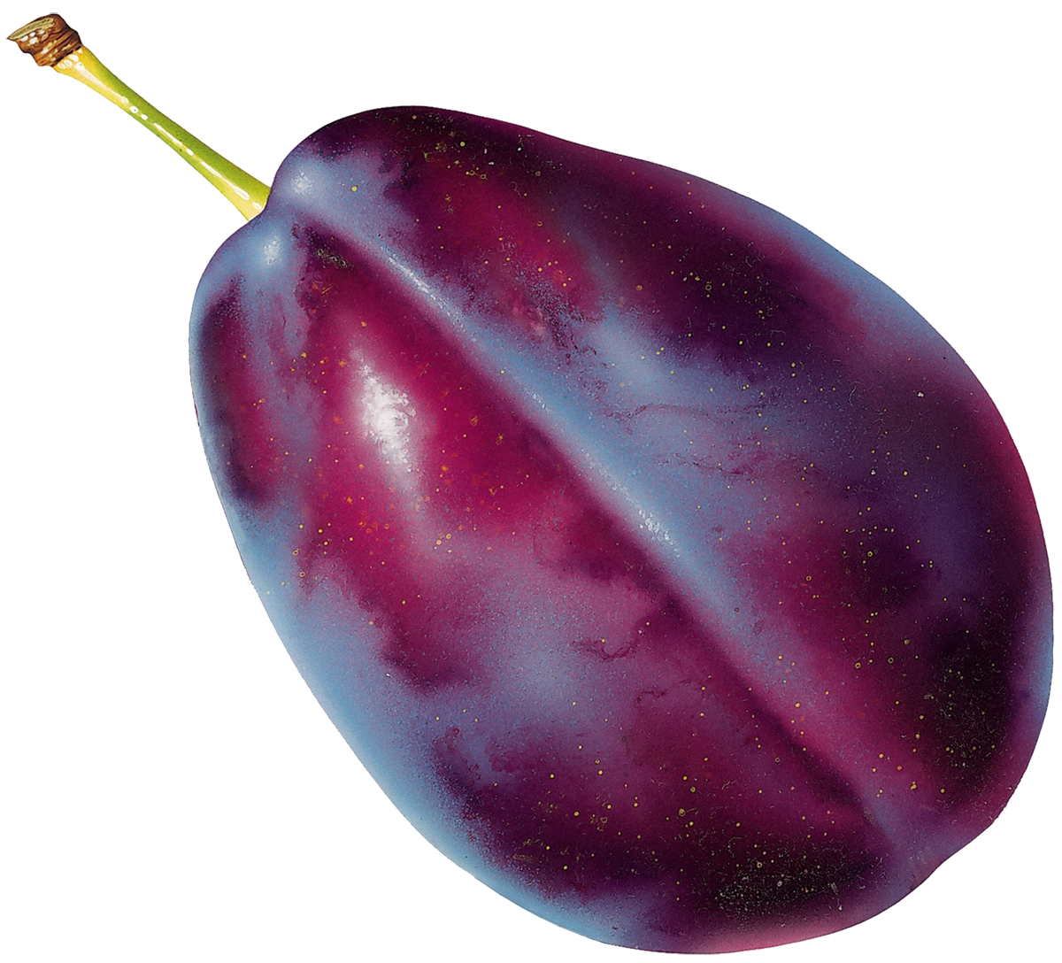 Plum clipart prunes. Prune picture fruit and