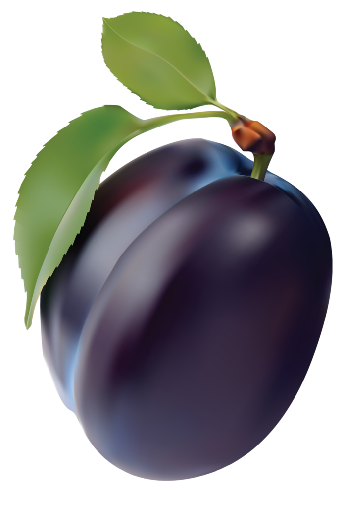 plum clipart real