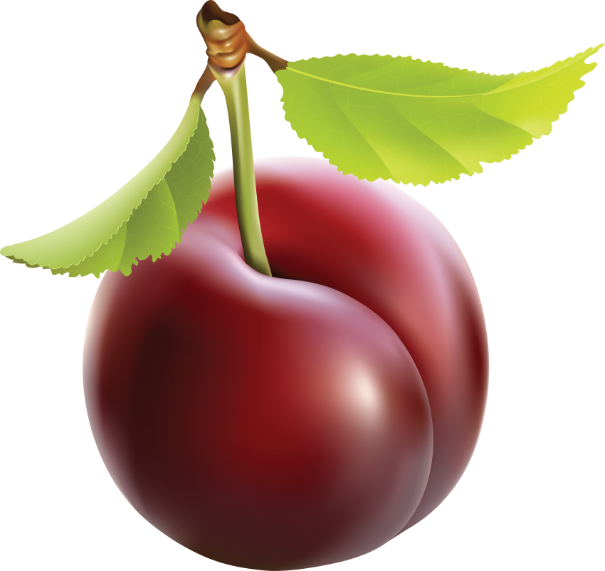 Free png toppng images. Plum clipart real image free library