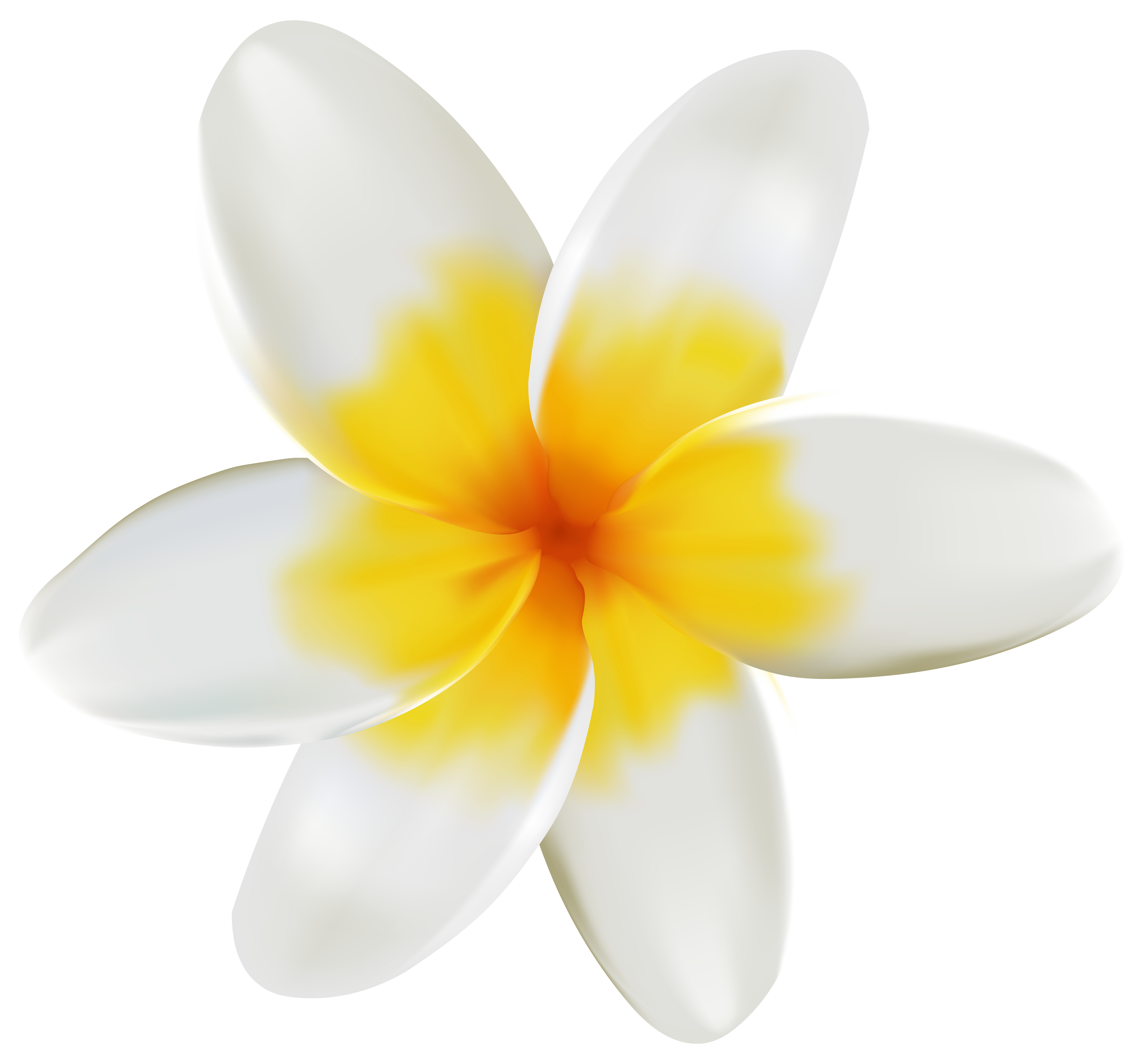 Plumeria flower png. Clipart image gallery yopriceville