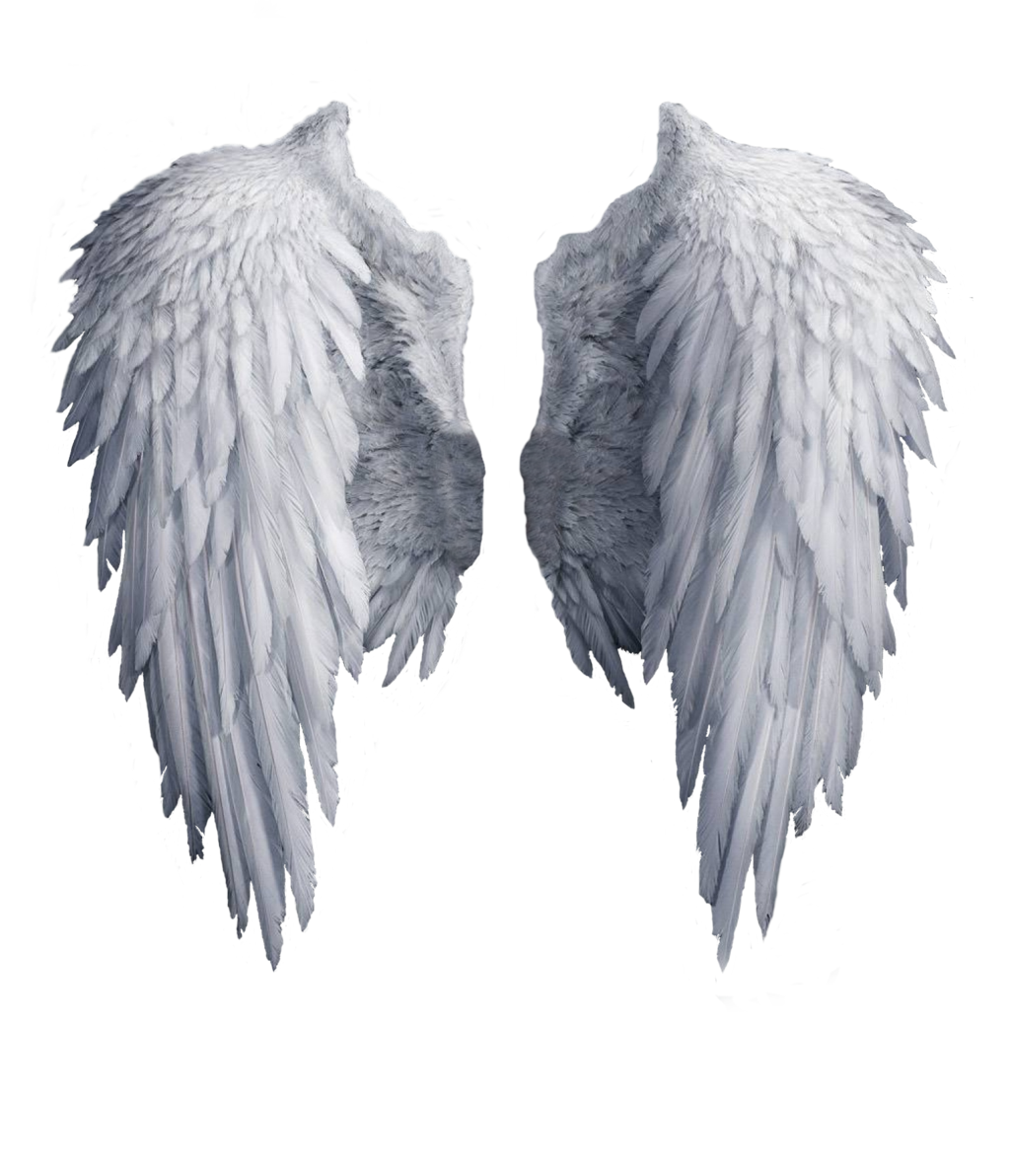 Png wings. Realistic angel drawing at