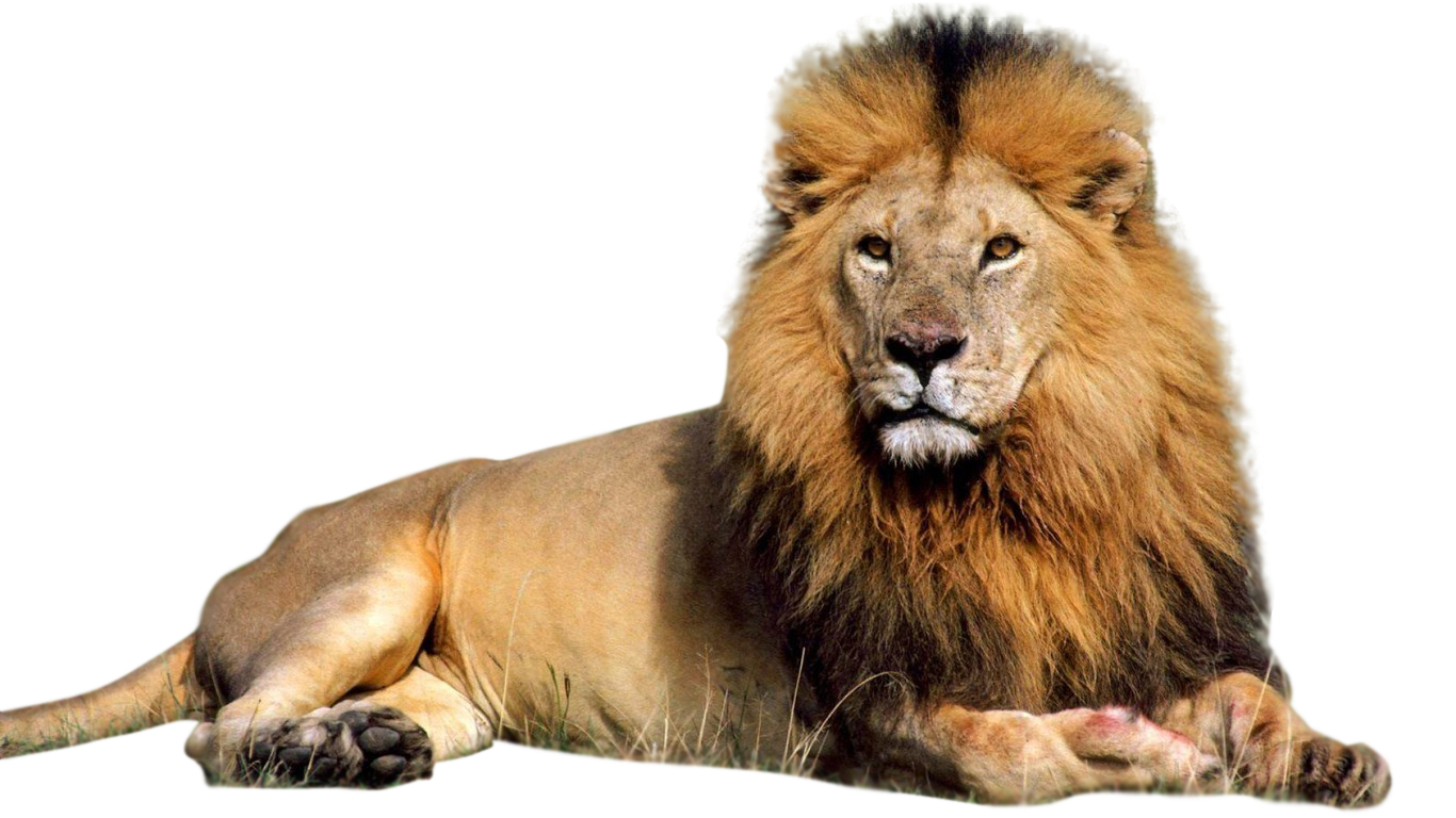 Png animal. Hd transparent images pluspng