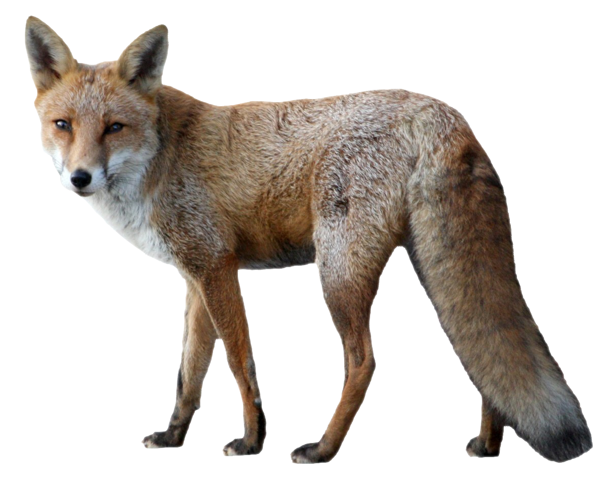 Png animals. Fox image purepng free