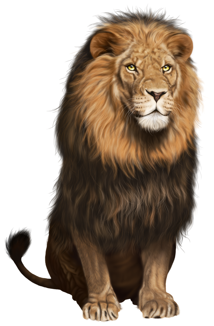 transparent bandage lion