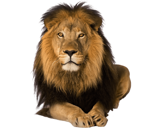 Png animals hd. New collection for editing