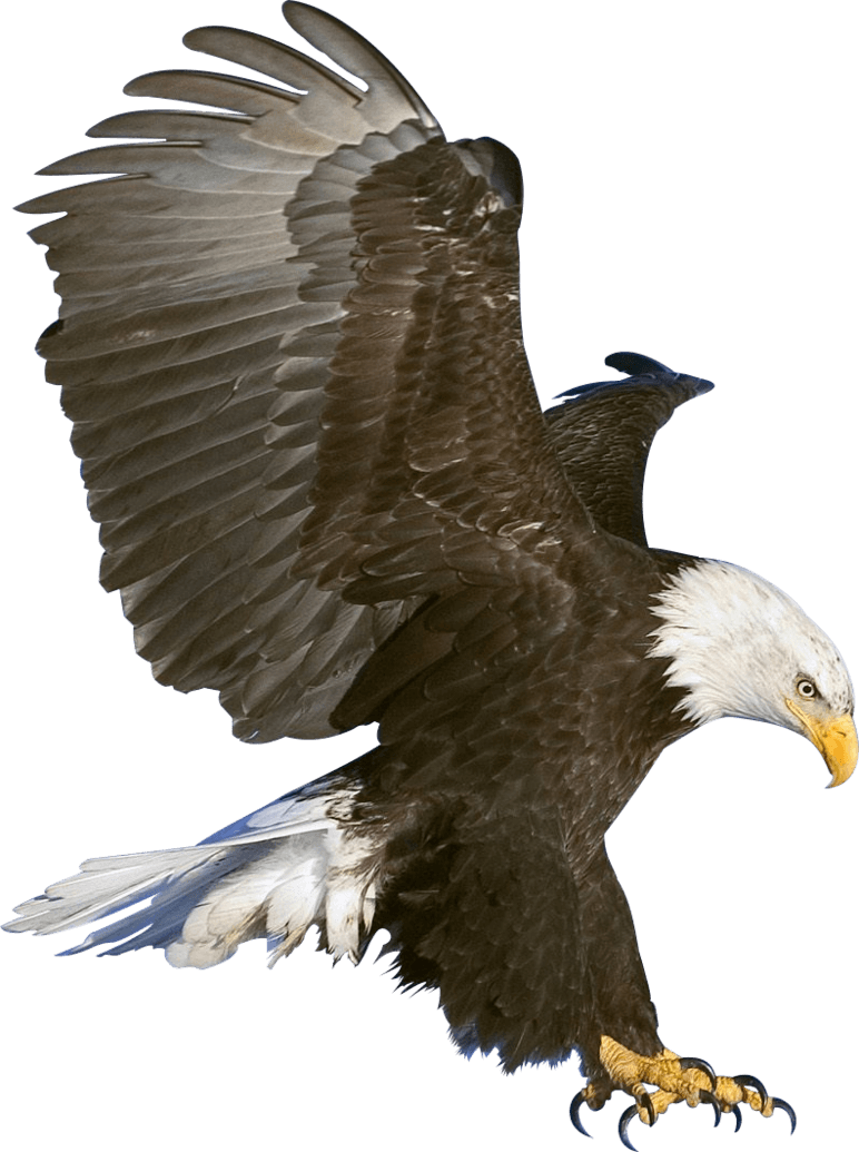 Eagle png. Claws transparent stickpng animals