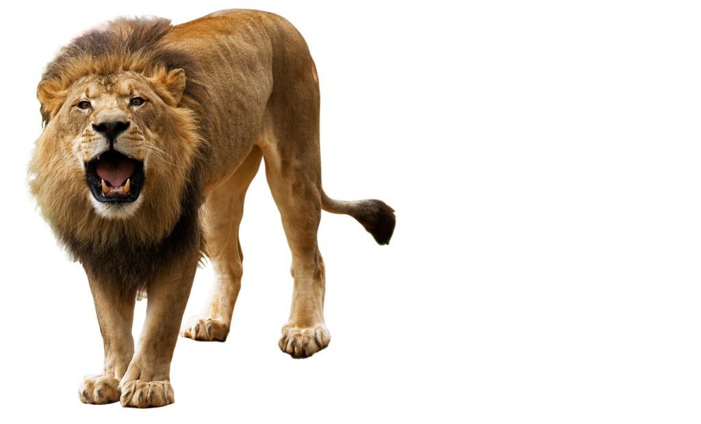 Png animals hd. Lion peoplepng com