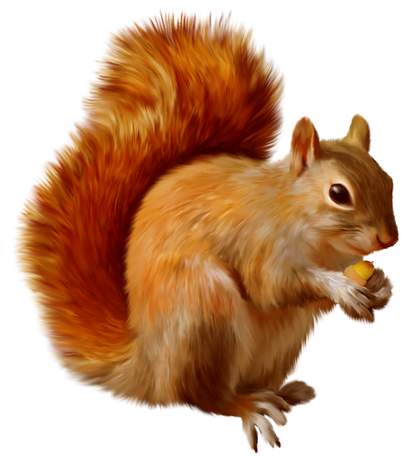 Png animals hd. Squirrel clipart gallery yopriceville