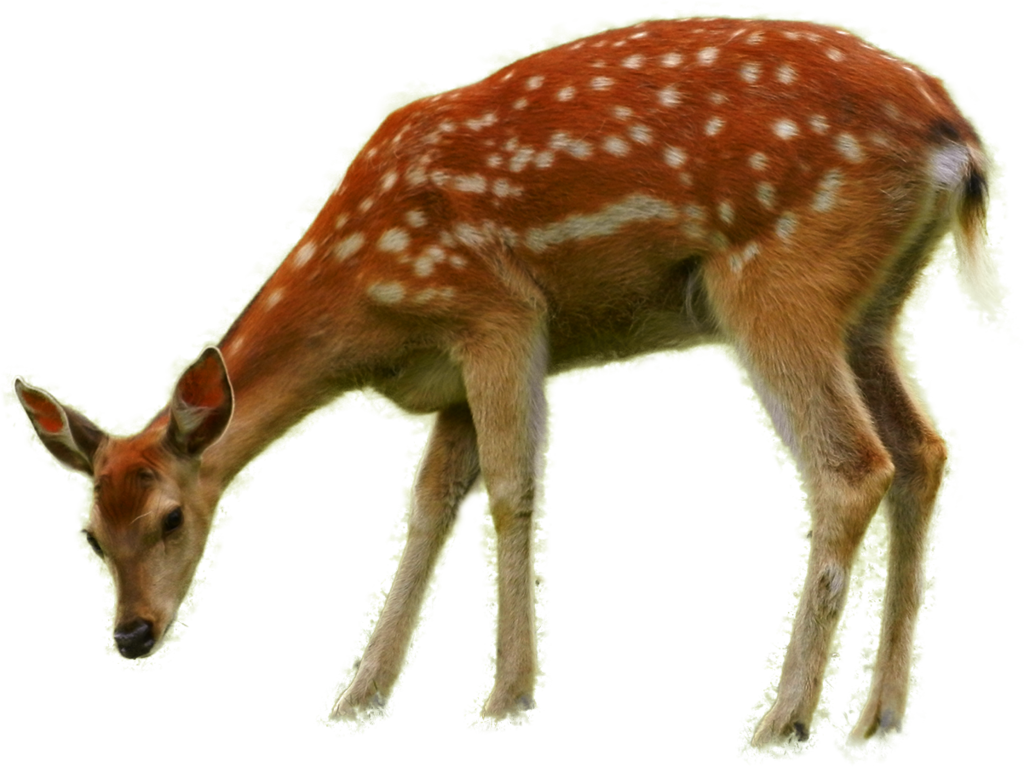 Png animals. Bambi by fumar porros